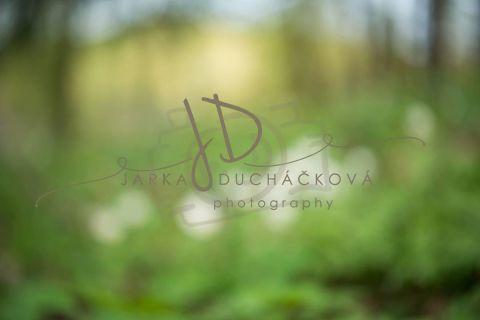 Fotopozadí - Květinový bokeh 4