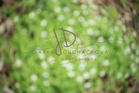Fotopozadí - Květinový bokeh 5