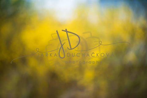 Fotopozadí - Květinový bokeh 6