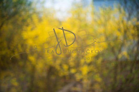 Fotopozadí - Květinový bokeh 7