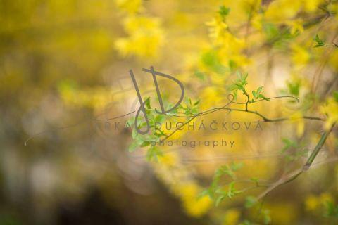 Fotopozadí - Květinový bokeh 8