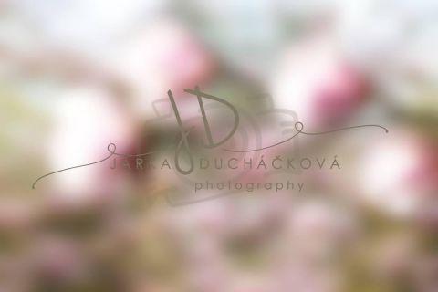 Fotopozadí - Květinový bokeh 9