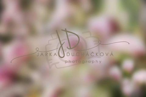 Fotopozadí - Květinový bokeh 10
