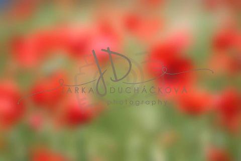 Fotopozadí - Květinový bokeh 11