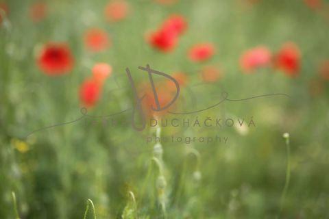 Fotopozadí - Květinový bokeh 12