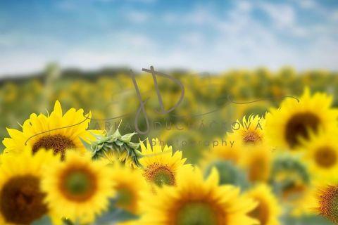 Fotopozadí - Květinový bokeh 13