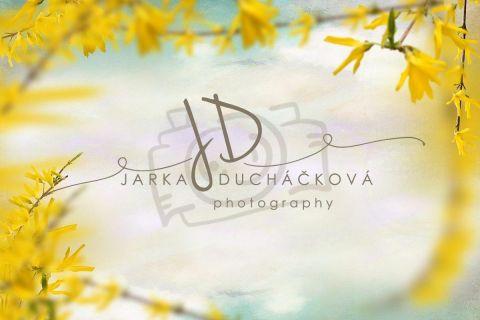Fotopozadí - Květinový bokeh 14