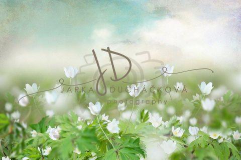 Fotopozadí - Květinový bokeh 15
