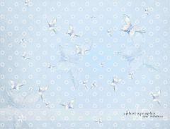Foto pozadí - motýlci modří