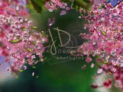 Fotopozadí - Květy jarní 1
