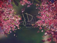 Fotopozadí - Květy jarní 2