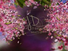 Fotopozadí - Květy jarní 3