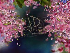 Fotopozadí - Květy jarní 4