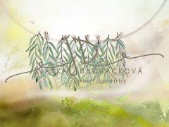 Fotopozadí - Jarní zeleň 22