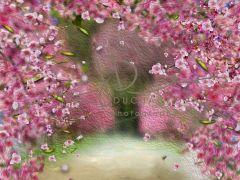 Fotopozadí - Květy jarní 6