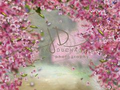 Fotopozadí - Květy jarní 7