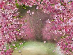 Fotopozadí - Květy jarní 8