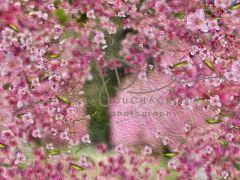 Fotopozadí - Květy jarní 9