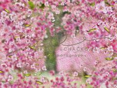Fotopozadí - Květy jarní 10