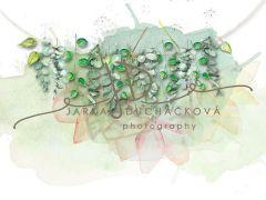 Fotopozadí - Jarní zeleň 30