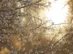 Fotopozadí - SPRING 9