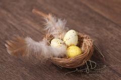 Hnízdečko s vajíčky a peřím
