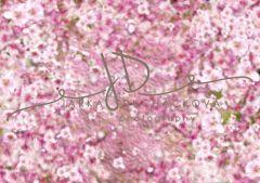 Fotopozadí - Květy jarní 15