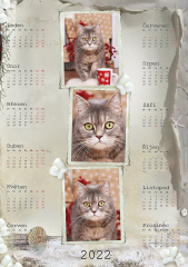 Kalendář roční 2022 - číslo 31