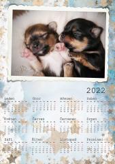 Kalendář roční 2022 - číslo 37