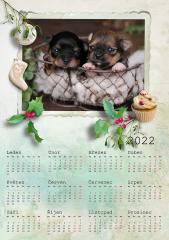 Kalendář roční 2022 - číslo 41