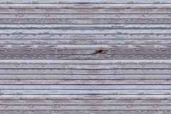 Weathered Wood 1,5x2,1m 11008