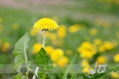 Fotopozadí - KRAJINA - příroda 4