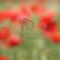 Vinyl fotopozadí - Květinový bokeh