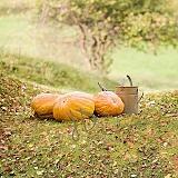Podzimní spojená